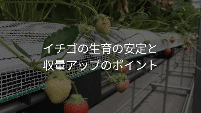 イチゴの収量アップ