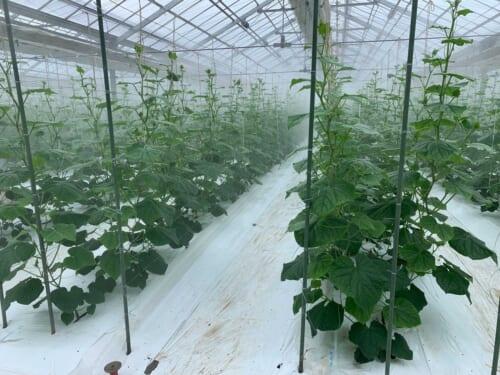 蒸散を促進する適切な湿度管理が大切