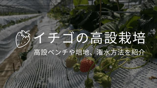 イチゴの高設栽培