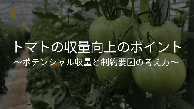 トマトの収量向上